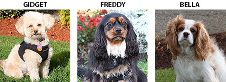 Pet Therapy Dogs - Gidget, Freddy & Bella