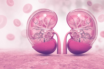 Human Kidney cross section on scientific background