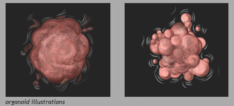 Organoid Illustrations