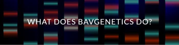 What Does BAVgenetics do